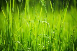 eden prairie lawn mowing